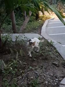 Skygg liten katt som var nyfiken på mig men inte vågade sig ända fram...
